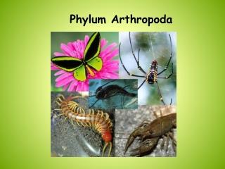 Phylum Arthropoda Trilobites, Chelicerates,  Myriapods