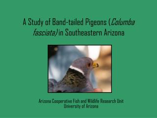 A Study of Band-tailed Pigeons ( Columba fasciata)  in Southeastern Arizona