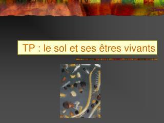 TP : le sol et ses �tres vivants