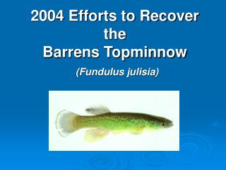 2004 Efforts to Recover the  Barrens Topminnow (Fundulus julisia)
