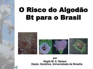 O Risco do Algodão Bt para o Brasil