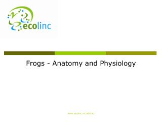 Frogs - Anatomy and Physiology