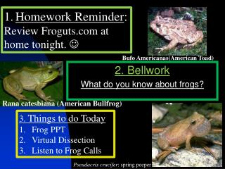 2. Bellwork What do you know about frogs?