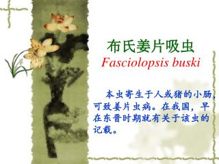 布氏姜片吸虫 Fasciolopsis buski