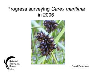 Progress surveying  Carex maritima  in 2006