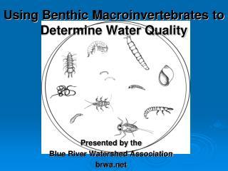 Using Benthic Macroinvertebrates to Determine Water Quality