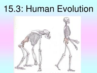 15.3: Human Evolution