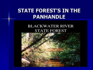 STATE FOREST'S IN THE PANHANDLE