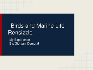Birds and Marine Life Rensizzle