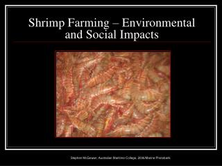 Shrimp Farming – Environmental  and Social Impacts