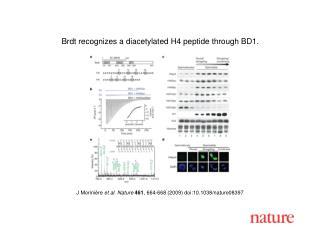 J Morini è re et al. Nature 461 ,  664 - 668  (2009) doi:10.1038/nature08 397
