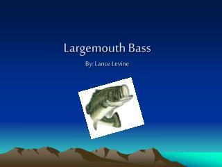 Largemouth Bass By: Lance Levine