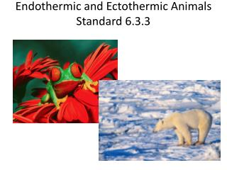 Endothermic and  Ectothermic  Animals Standard 6.3.3