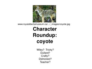 Character Roundup: coyote