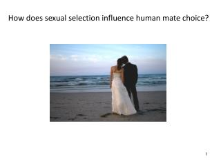 How does sexual selection influence human mate choice