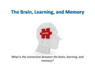 The Brain, Learning, and Memory