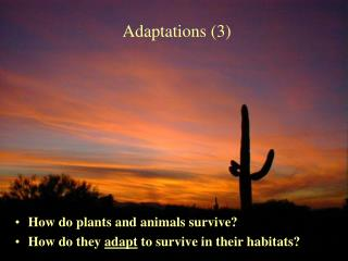 Adaptations 3