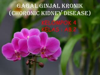 GAGAL GINJAL KRONIk (CHORONIC KIDNEY DISEASE)