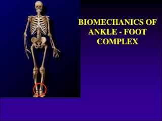 BIOMECHANICS OF ANKLE - FOOT COMPLEX