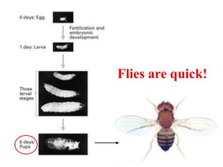 Flies are quick
