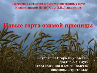 Кудряшов Игорь Николаевич Доктор с.-х. наук, отдел селекции и семеноводства пшеницы и тритикале