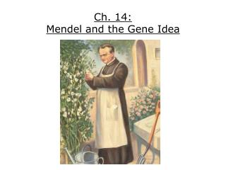 Ch. 14: Mendel and the Gene Idea