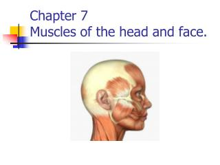Chapter 7 Muscles of the head and face.