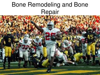 Bone Remodeling and Bone Repair