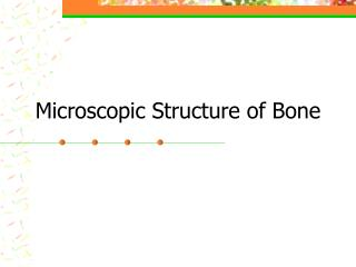 Microscopic Structure of Bone