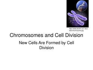 Chromosomes and Cell Division
