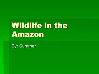 Wildlife in the Amazon