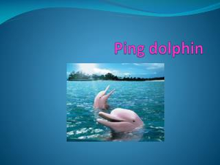 Ping dolphin