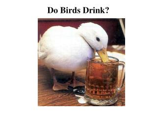 Do Birds Drink?