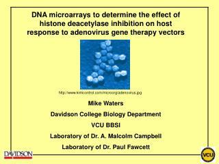 kimicontrol/microorg/adenovirus.jpg