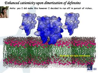 Enhanced cationicity upon dimerization of defensins