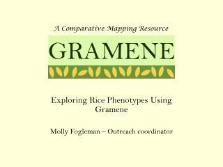 Exploring Rice Phenotypes Using Gramene Molly Fogleman � Outreach coordinator