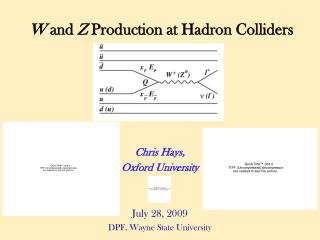 W  and  Z  Production at Hadron Colliders