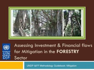Assessing Investment & Financial flows for Mitigation in the  FORESTRY  Sector