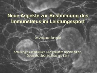 Neue Aspekte zur Bestimmung des Immunstatus im Leistungssport Dr. Annette Schmidt
