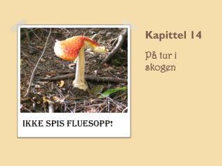 Kapittel 14 P� tur i skogen