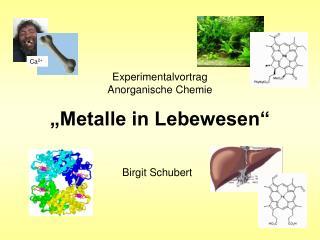 """Experimentalvortrag  Anorganische Chemie """"Metalle in Lebewesen"""""""