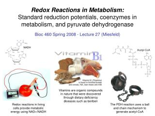 Redox Reactions in Metabolism: Standard reduction potentials, coenzymes in metabolism, and pyruvate dehydrogenase