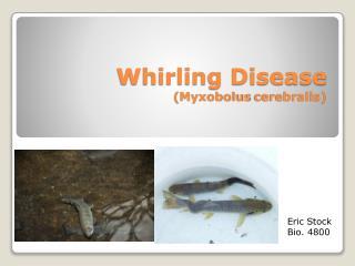Whirling Disease ( Myxobolus cerebralis )