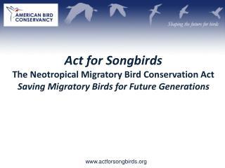actforsongbirds