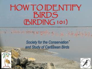 HOW TO IDENTIFY BIRDS (BIRDING 101)
