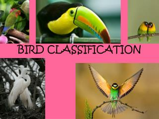 BIRD CLASSIFICATION