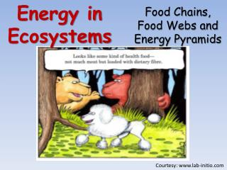 Energy in Ecosystems