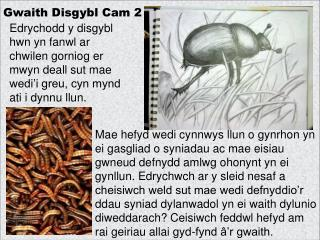 Gwaith Disgybl Cam 2
