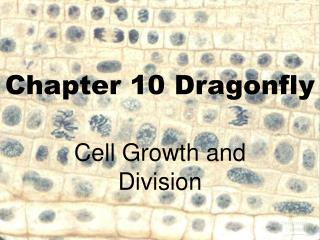 Chapter 10 Dragonfly