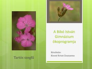 A Bibó István Gimnázium  ö koprogramja